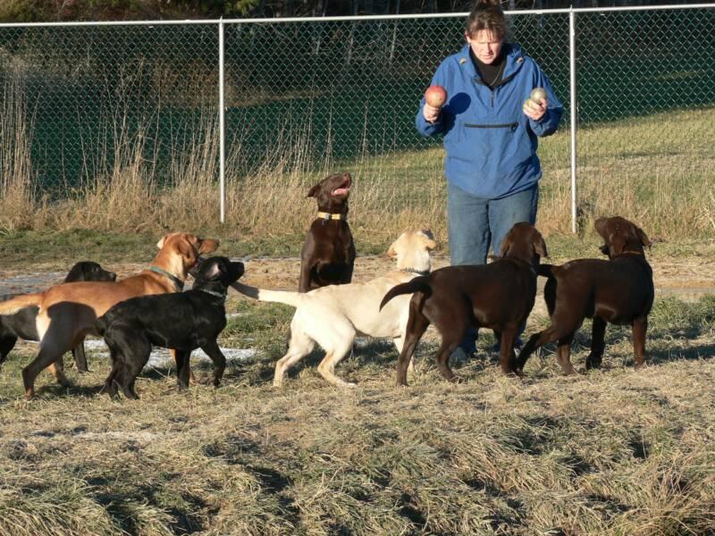 Maranatha Farm Kennels: Pups | Dogs | Day Care